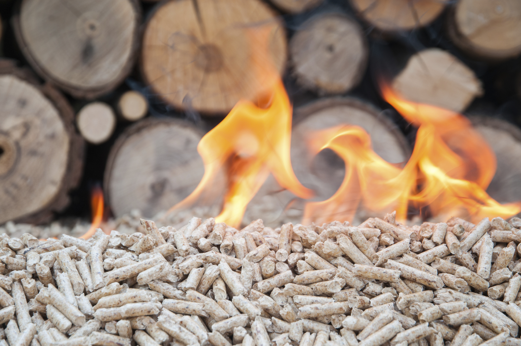 What is Biomass Energy? - Big Green Switch